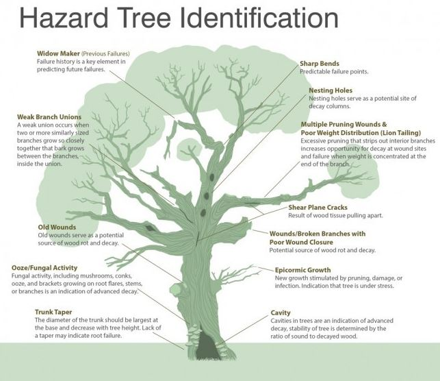 tree-hazards