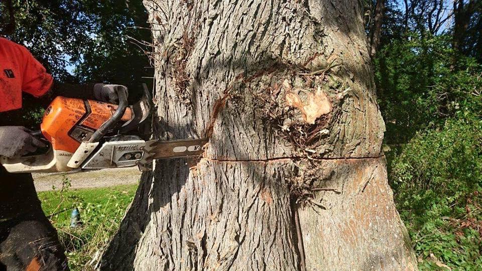 complex-tree-surgery