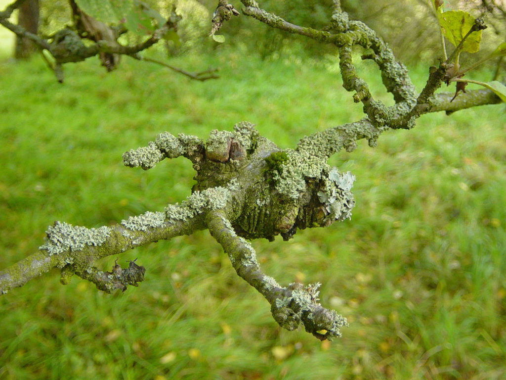 tree-with-disease