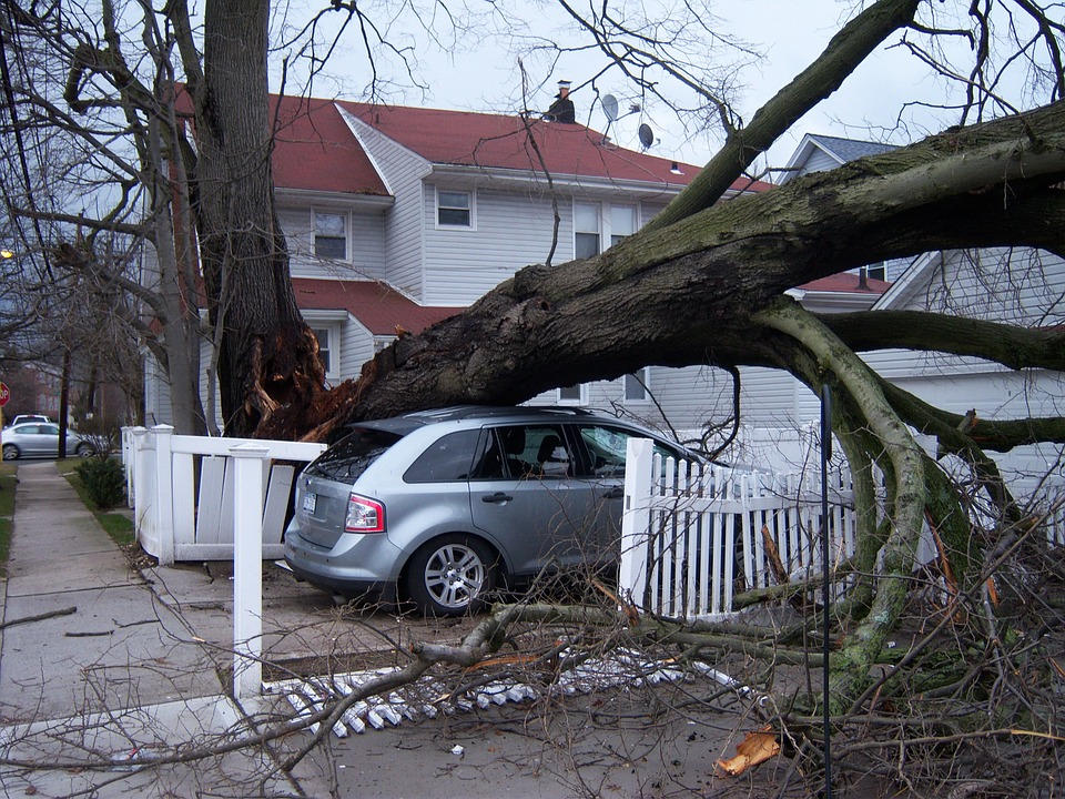 tree-damage