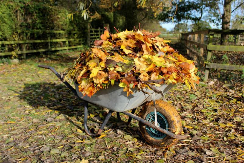 leaf-clearing