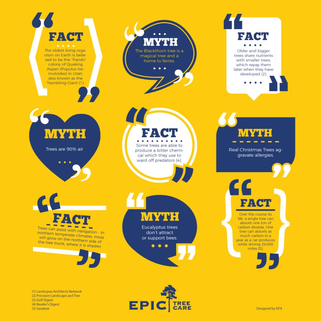 tree-myths