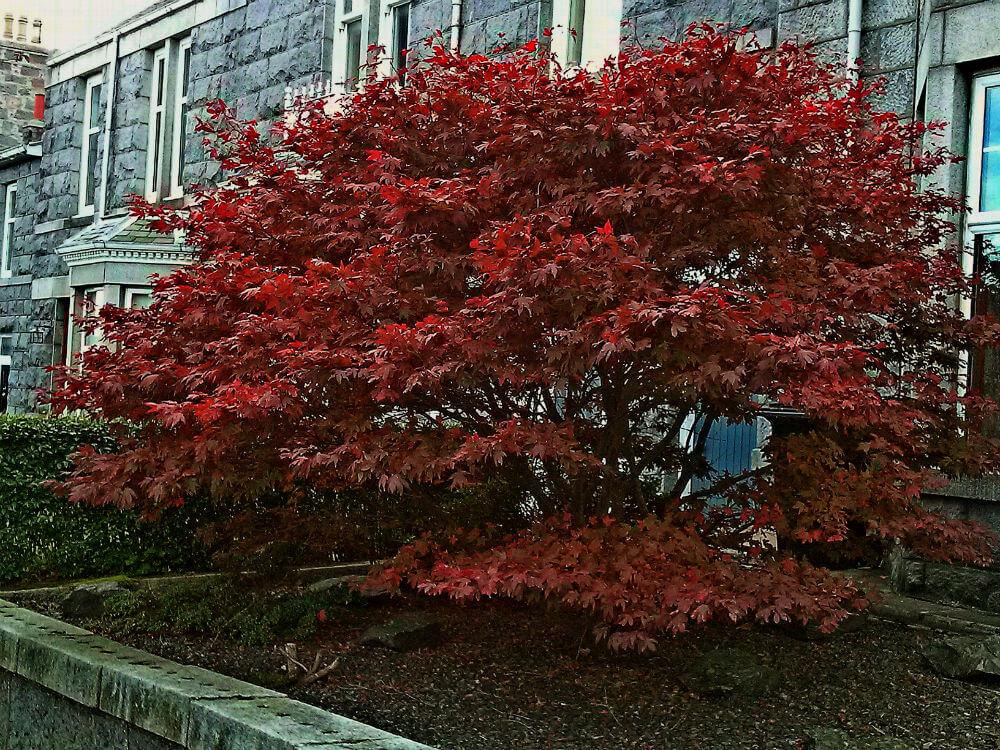 urban-garden-autumn-colour