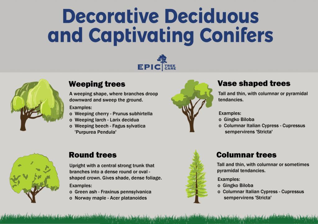 Deciduous-Conifers