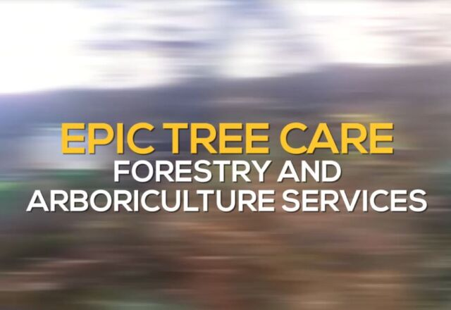 Epic Tree Services