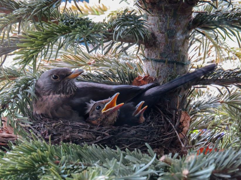 bird-nest-tree