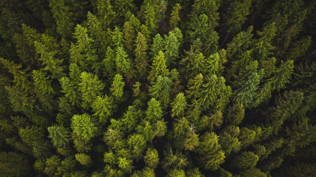 Protected Trees and Conservation Areas