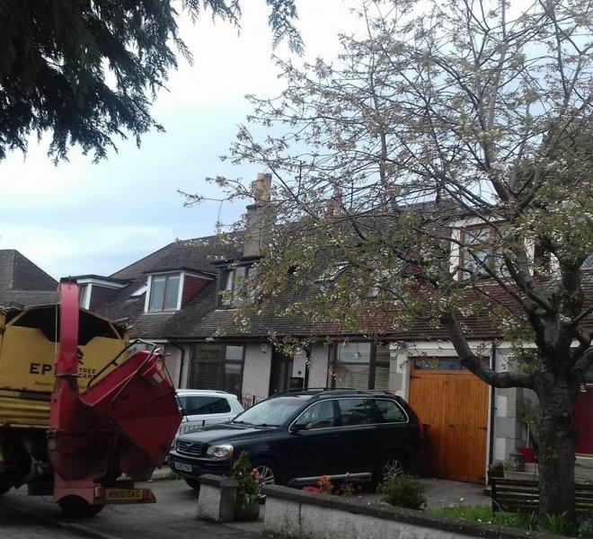 garden tree surgery