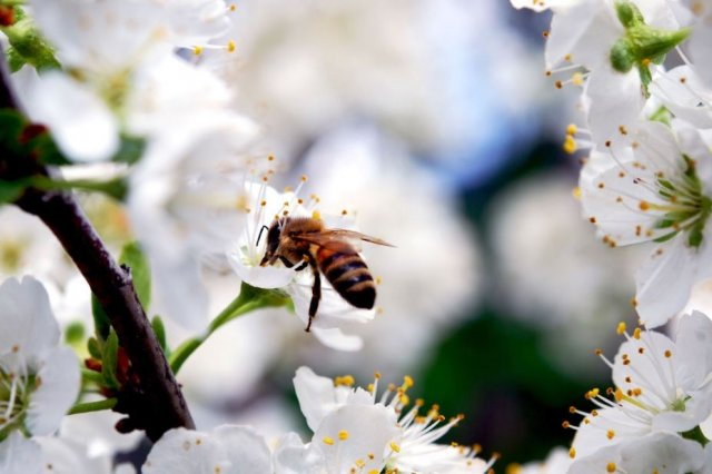 trees for bees