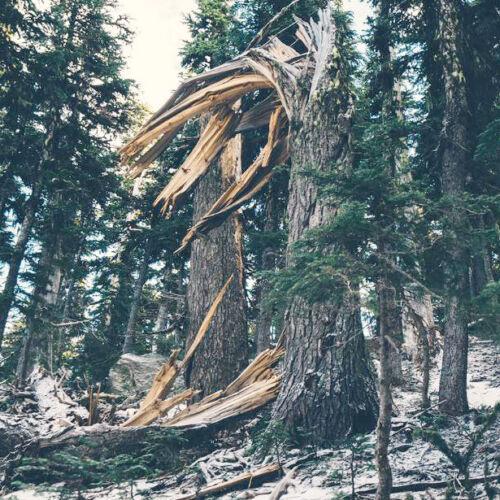 fallen tree storm damage