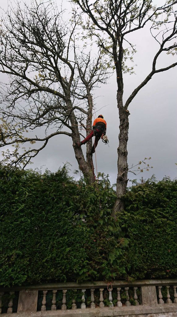 Hedge Pruning and Maintenance