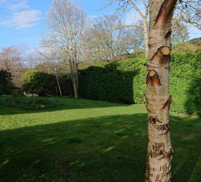 tree pruning surgery