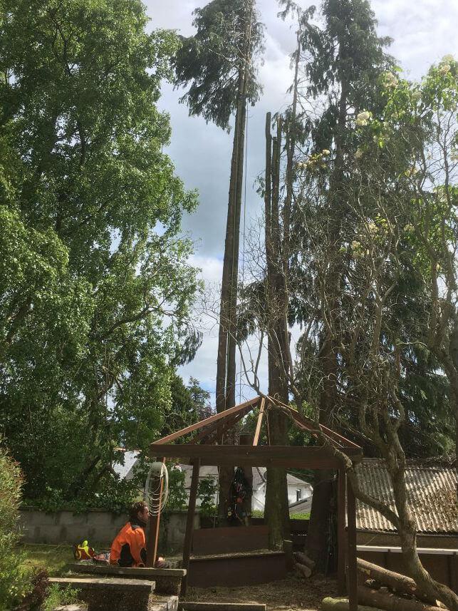 tree surgeon timber
