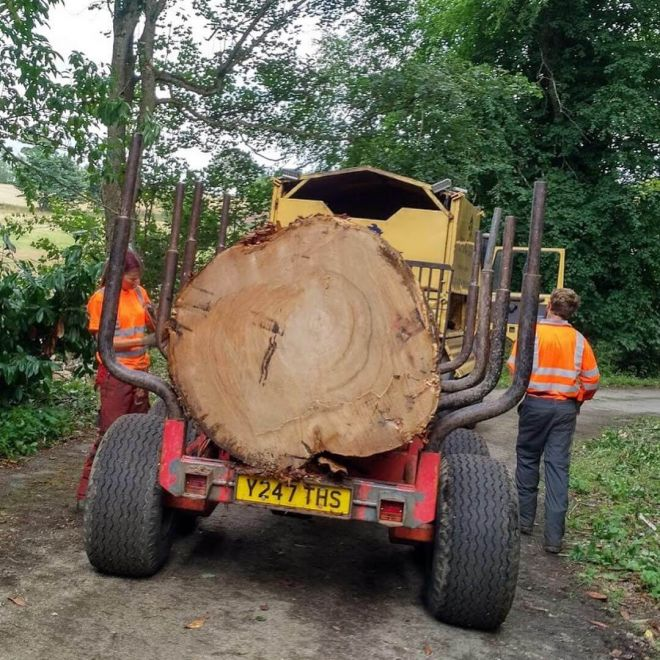 commercial-tree-services forestry machinery log