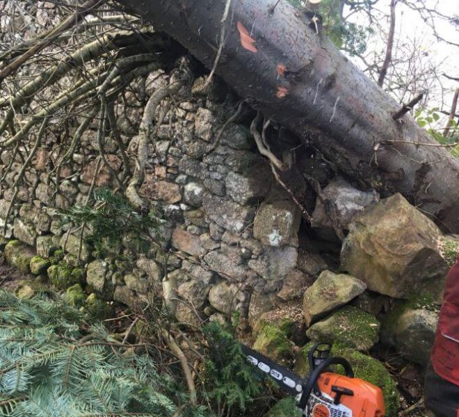 emergency tree removal professional tree surgery services fallen tree storm damage