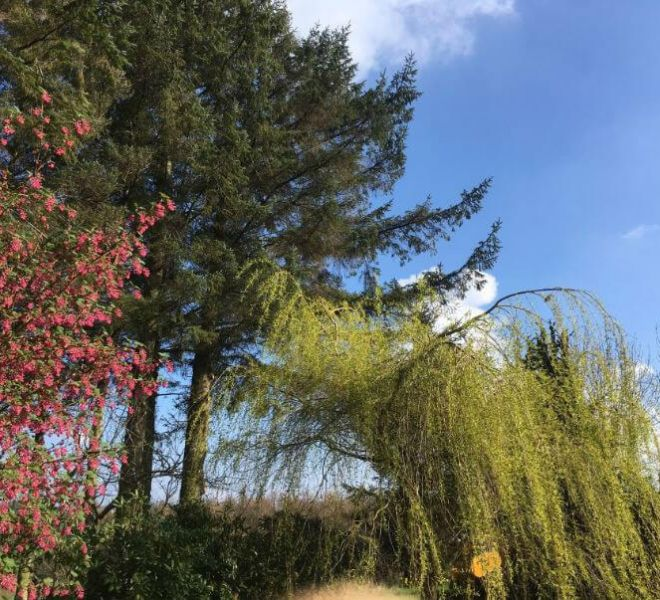 tree management and aftercare