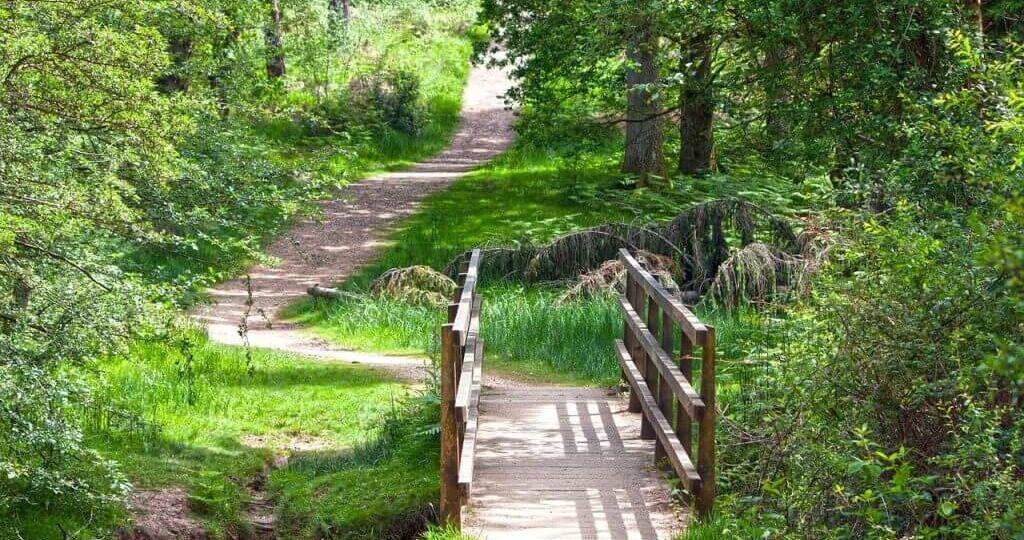 forest-walk-scotland