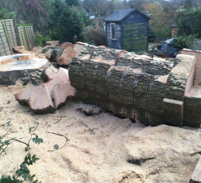 log sawmill services timber logging