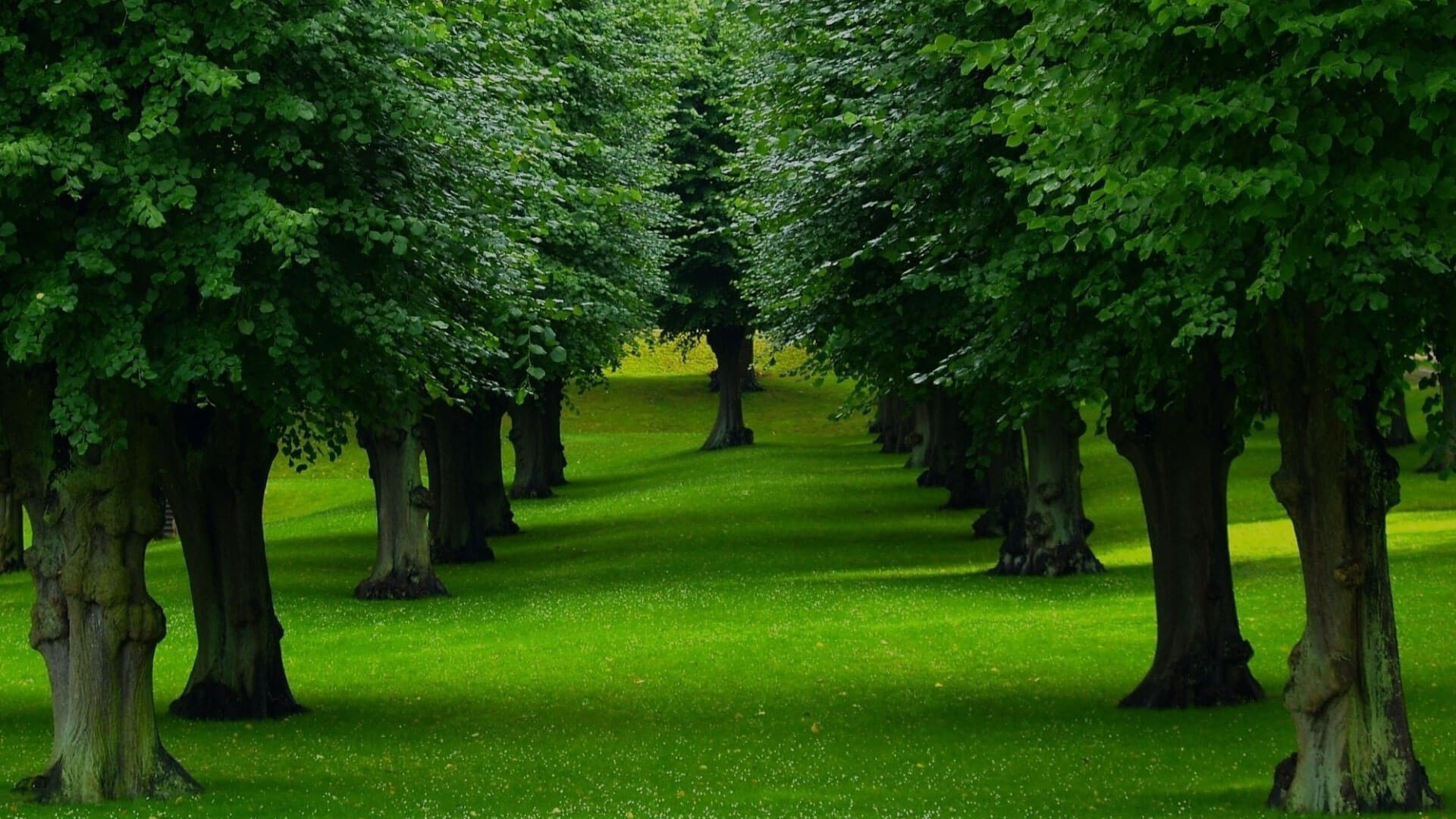 Tree and Hedge Planting landscaping management